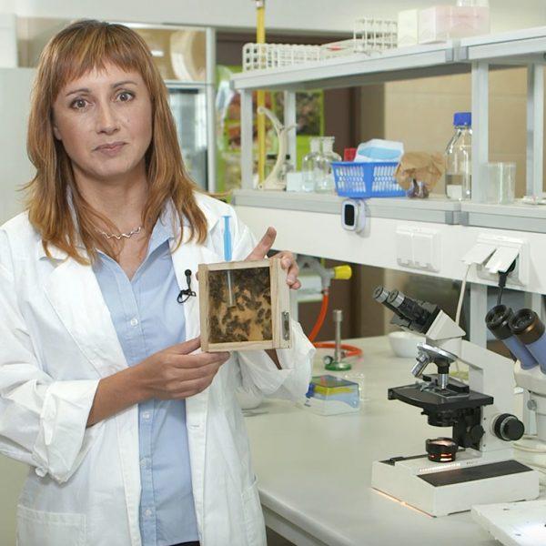Zdjęcie do wykładu Mikrosporydia – śmiertelne pasożyty